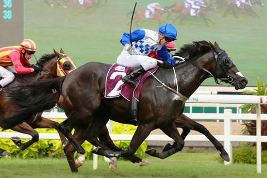 Elite Invincible scores fighting win in Stewards' Cup